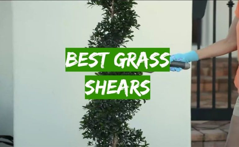 10 Best Grass Shears