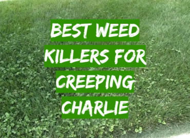 Best Weed Killers For Creeping Charlie