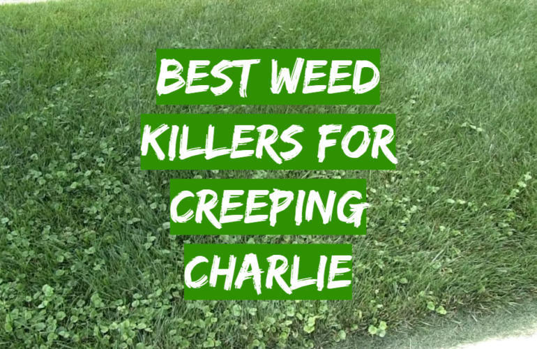 5 Best Weed Killers For Creeping Charlie