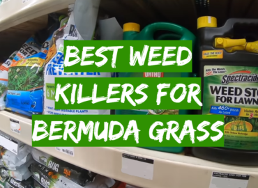 5 Best Weed Killers For Bermuda Grass