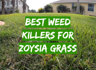 5 Best Weed Killers For Zoysia Grass