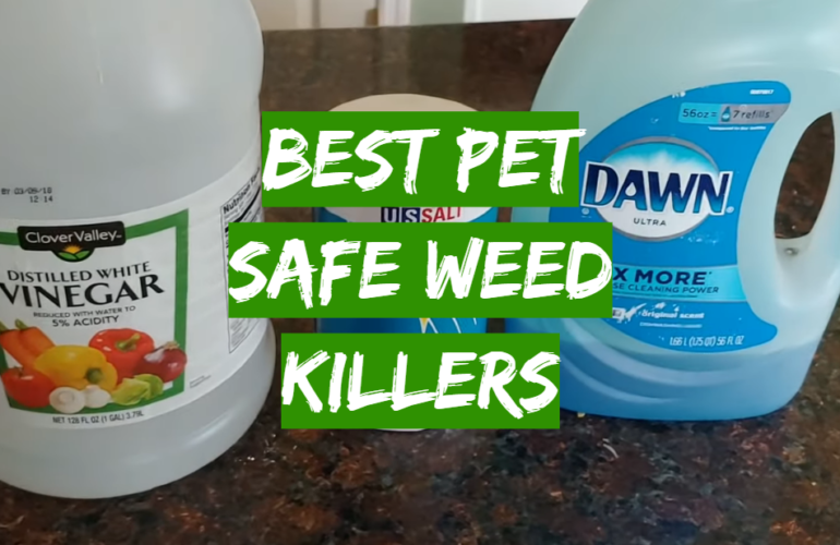 5 Best Pet Safe Weed Killers