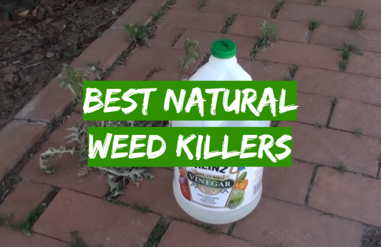 5 Best Natural Weed Killers
