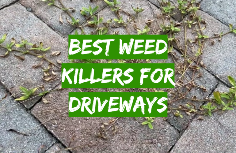 5 Best Weed Killers For Driveways