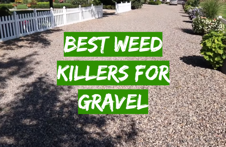 5 Best Weed Killers For Gravel