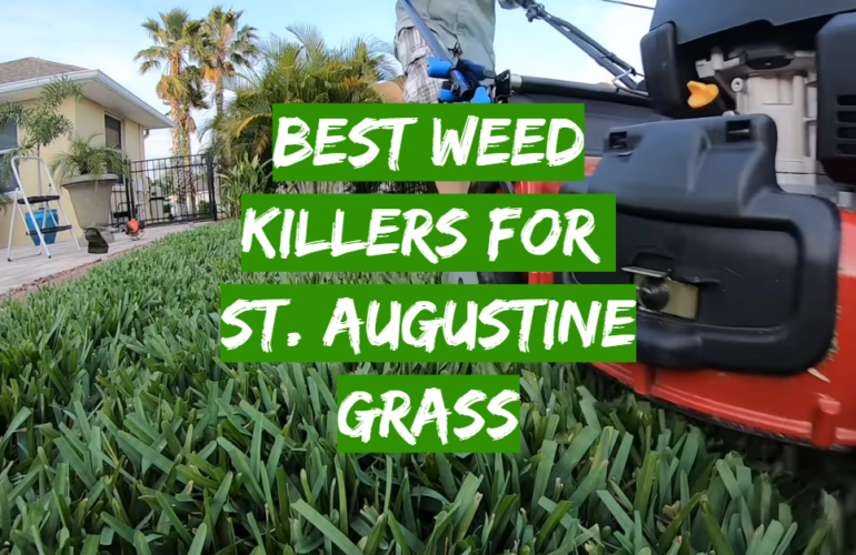 5 Best Weed Killers For St. Augustine Grass
