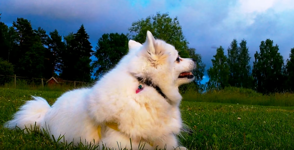 How Long to Keep Dogs Off Grass After Using Weed Killers Answer
