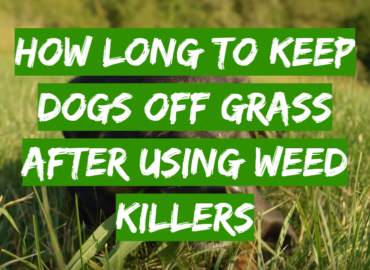 How Long to Keep Dogs Off Grass After Using Weed Killers