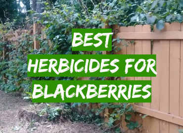 Best Herbicides for Blackberries