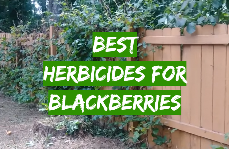 5 Best Herbicides for Blackberries