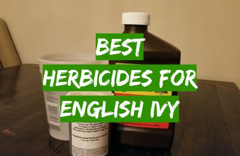 5 Best Herbicides for English Ivy
