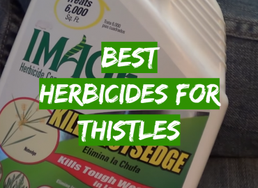 Best Herbicides for Thistles