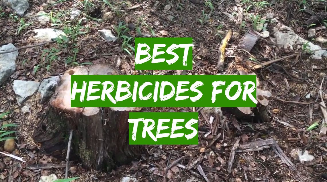 Best Herbicides for Trees