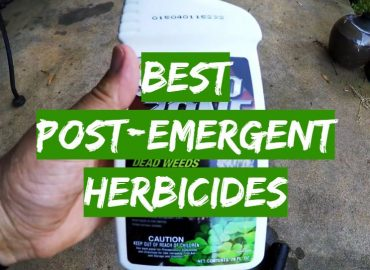 Best Post-Emergent Herbicides