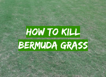 How to Kill Bermuda Grass