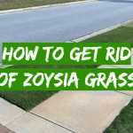 How to get rid of Zoysia grass