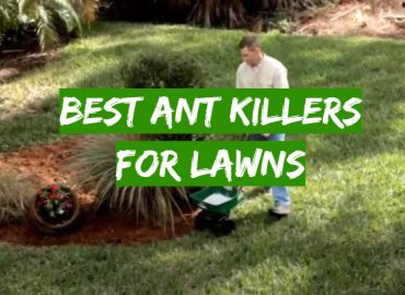 5 Best Ant Killers for Lawns