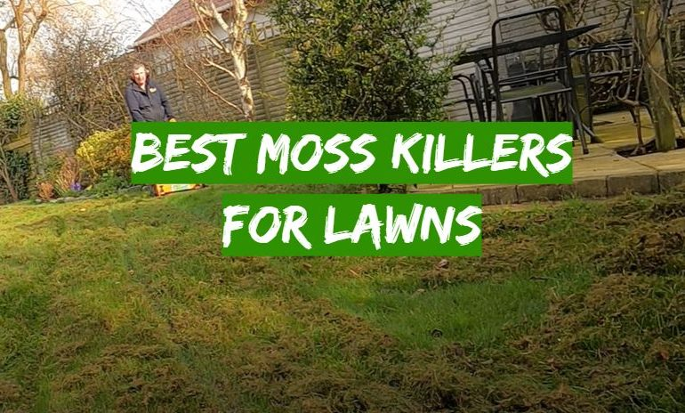 5 Best Moss Killers for Lawns