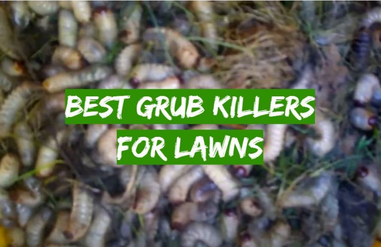 5 Best Grub Killers for Lawns