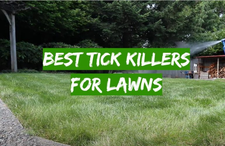 5 Best Tick Killers for Lawns