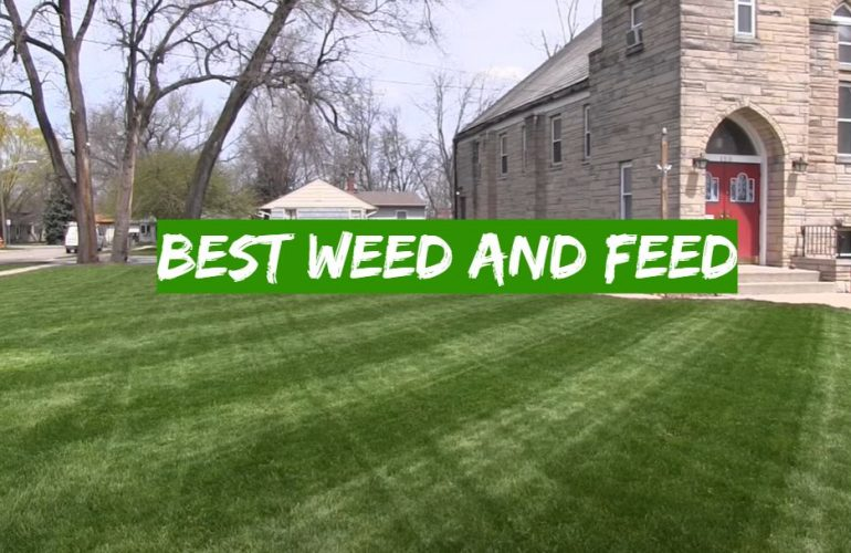 5 Best Weed and Feed