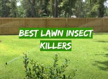 5 Best Lawn Insect Killers