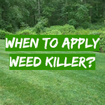 When to apply weed killer