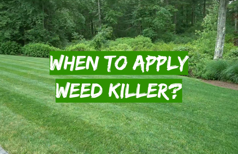 When to Apply Weed Killer?