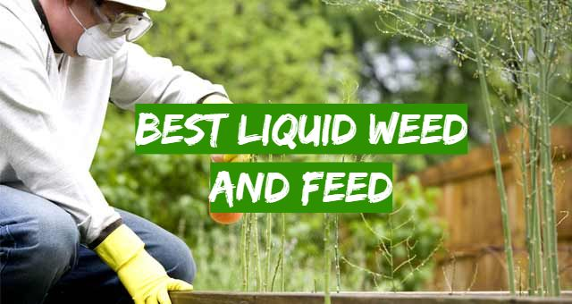 5 Best Liquid Weed and Feed
