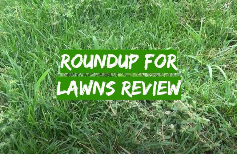 Roundup for Lawns Review